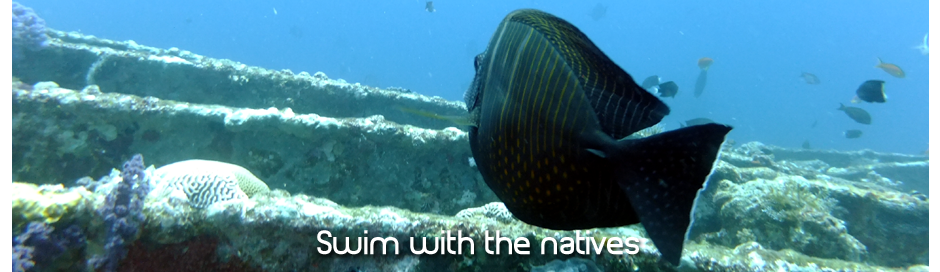 swim with the natives